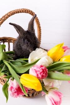 Simpatico coniglio grigio che si siede in un cestino con i fiori variopinti dei tulipani