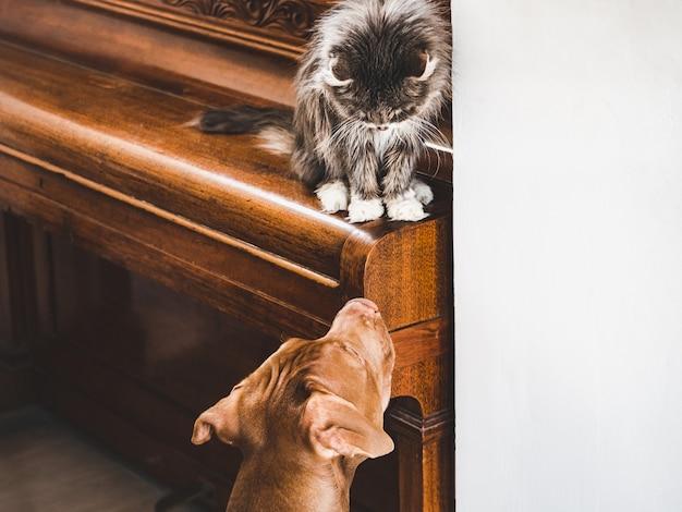 Simpatico cucciolo e adorabile gattino. avvicinamento