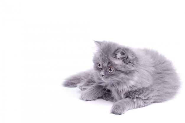 Simpatico gattino