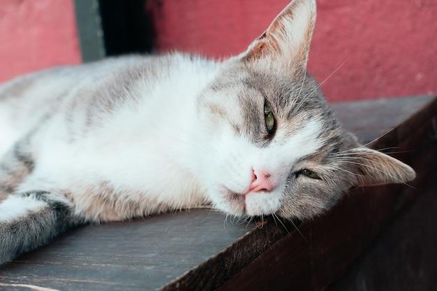 Simpatico gatto di strada grigio