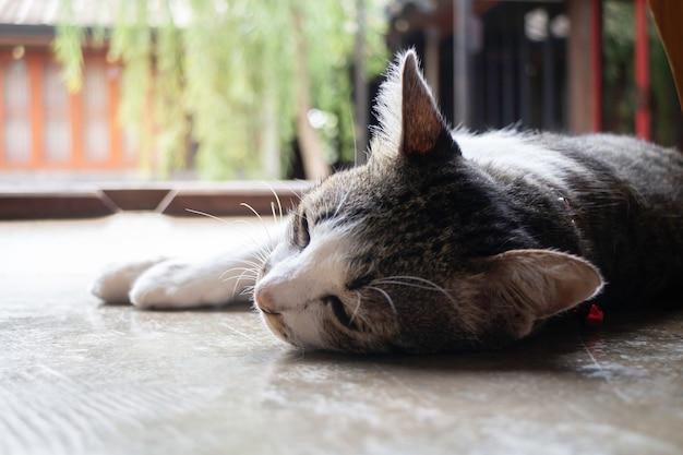 Simpatico gatto domestico si addormentò