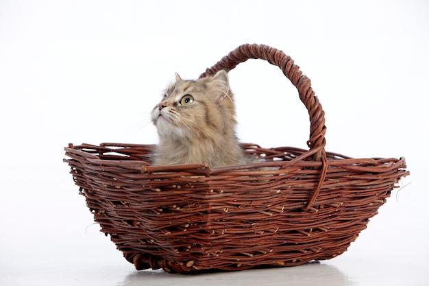Simpatico gatto fulvo in un cesto di vimini