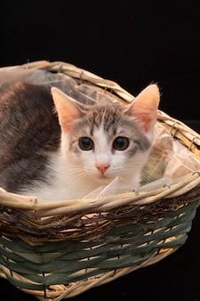 Simpatico gatto grigio birichino con lunghi baffi