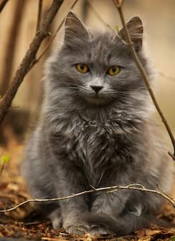 Simpatico gatto grigio che gioca in cortile