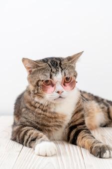Simpatico gatto grigio con gli occhiali