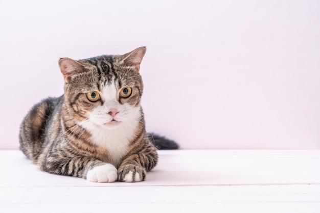 Simpatico gatto grigio