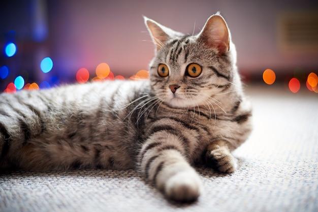 Simpatico gatto sdraiato sul pavimento