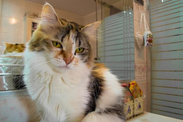 Simpatico gatto seduto davanti allo specchio