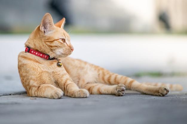 Simpatico gatto si sdraia sulla strada