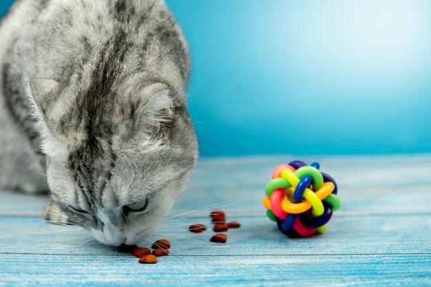 Simpatico gatto sta mangiando cibo secco