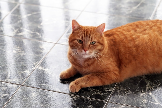 Simpatico gatto sul pavimento