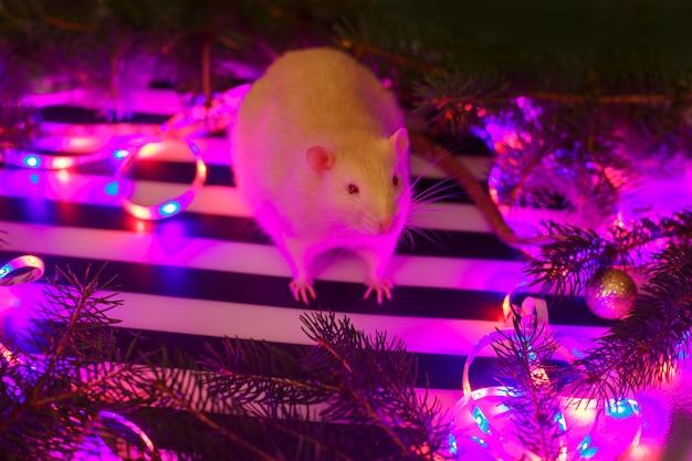 Simpatico ratto bianco a natale