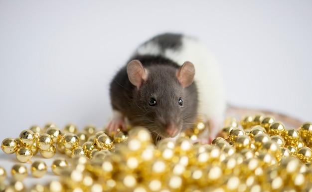 Simpatico ratto domestico bianco nelle decorazioni di capodanno del 2020