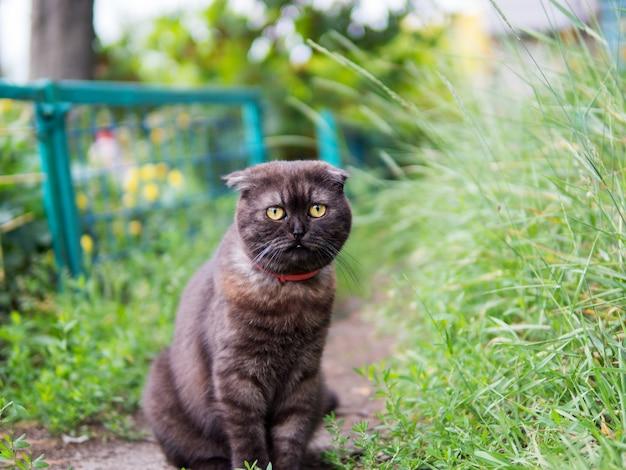 Simpatico ritratto di gatto nero scozzese