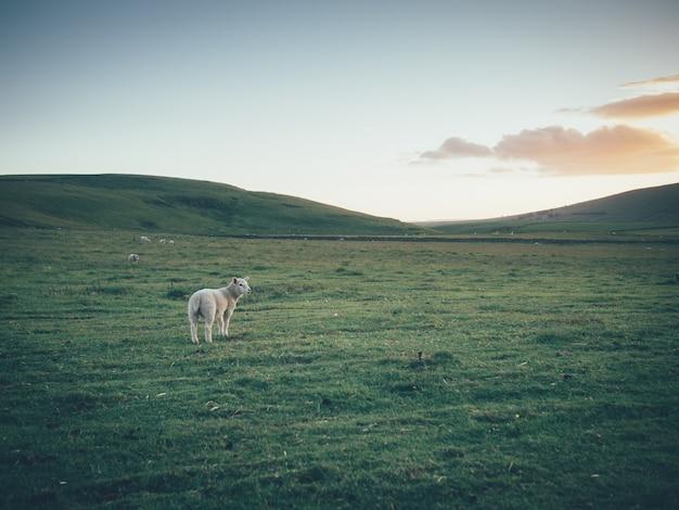 Singola nave in un grande bellissimo campo verde con colline e bel cielo
