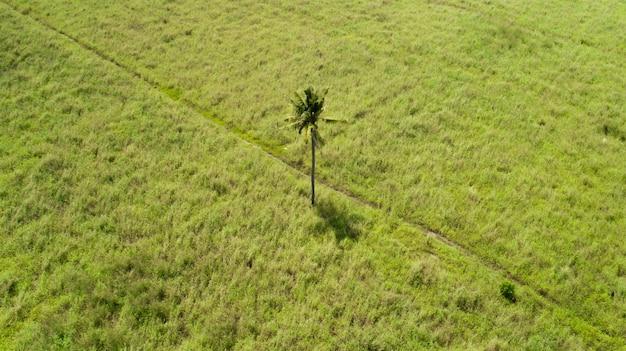 Singola palma nel mezzo di un campo piano su un'isola