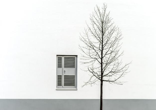Singolo albero nudo di fronte a un muro bianco e grigio con una finestra