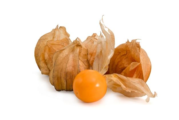 Singolo alchechengio arancio maturo del primo piano
