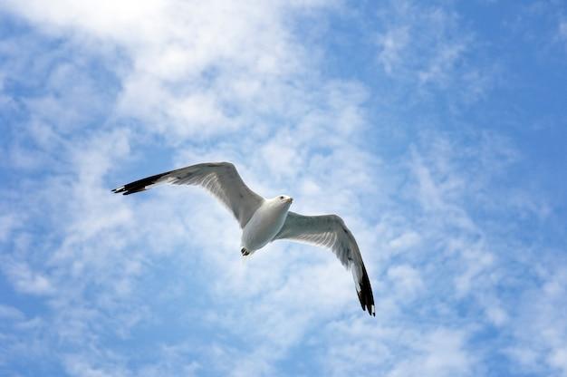 Singolo volo del gabbiano sul cielo blu e nuvole bianche.