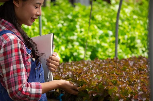 Sistema di coltura idroponica, piantando verdure ed erbe senza usare il terreno per la salute