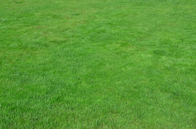 Sito con erba verde uniformemente tagliata.