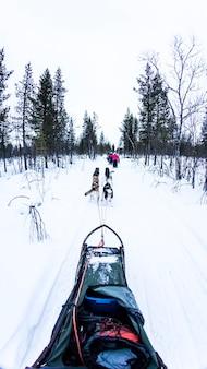Slitta trainata da cani con husky nel bellissimo paesaggio