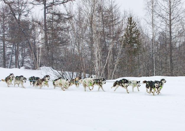 Slitta trainata da cani in esecuzione su un paesaggio invernale