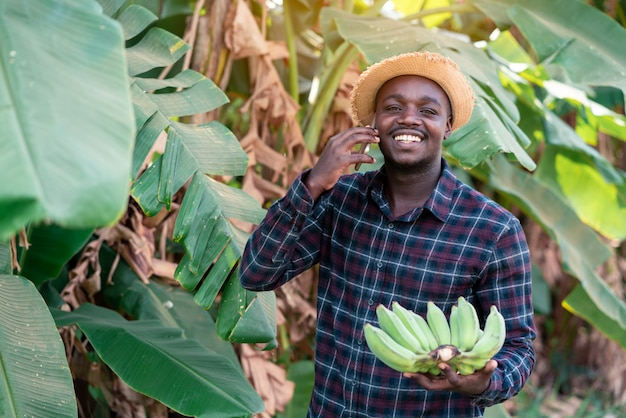 Smartphone e banana africani della tenuta dell'agricoltore all'azienda agricola organica