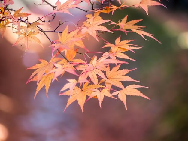 Soft focus di foglie d'acero rosso su foglie di sfocatura rosso in autunno