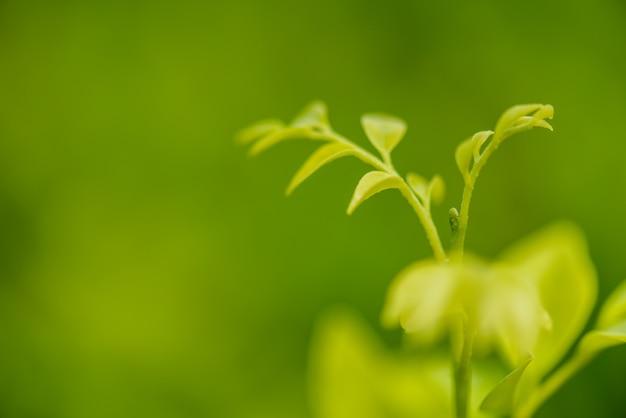 Soft focus verde lasciare al sole e sfondo verde