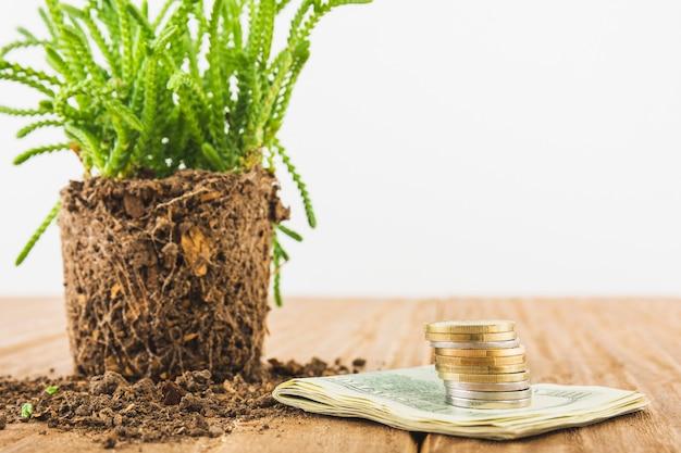 Soldi con pianta sul tavolo