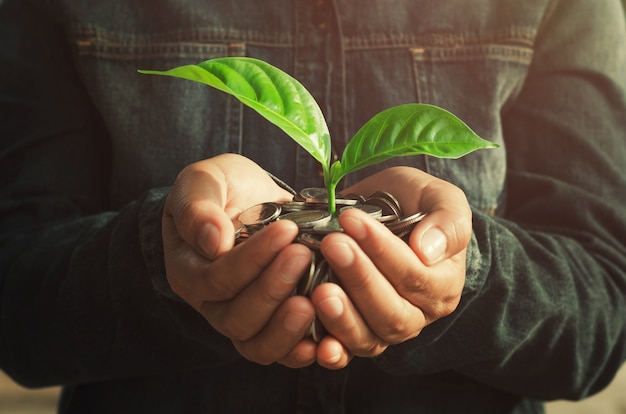 Soldi della holding della mano di concetto e pianta piccola crescente