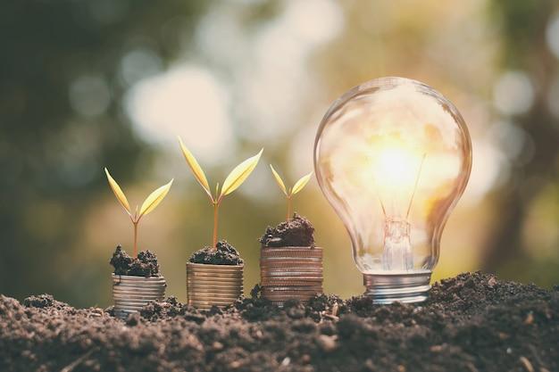 Soldi growht piccolo albero con lampadina sul suolo. concetto di risparmio energetico e finanziario