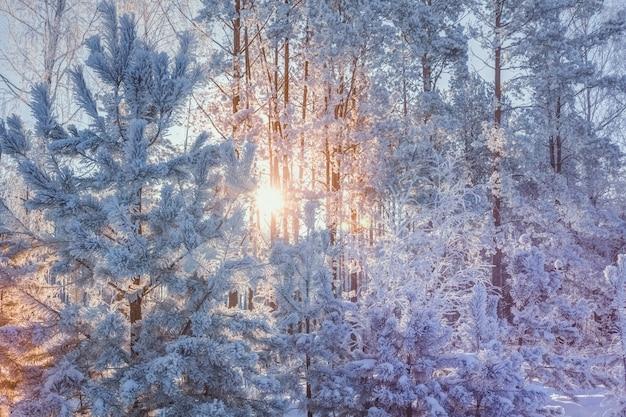 Sole della foresta di inverno nei rami nella neve