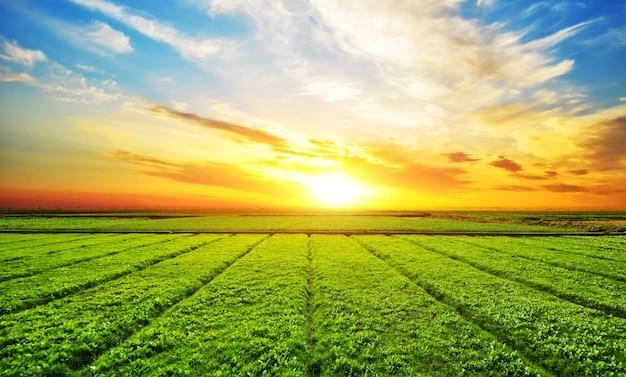 Soleggiato paesaggio prato