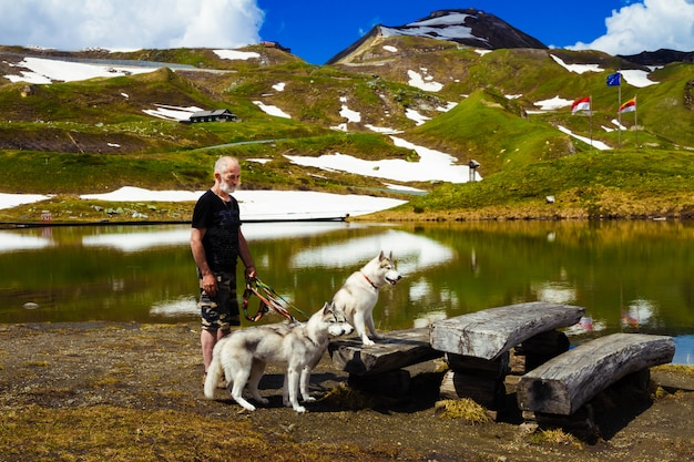 Sono seduti tre cani. uno stormo di siberian husky.