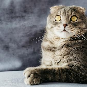 Sorpreso gatto piega sul divano