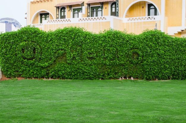 Sorriso sorridente e ciao iscrizione sullo sfondo di un recinto di foglie verdi.