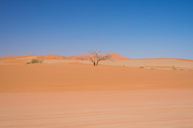 Sossusvlei namibia, alberi di acacia intrecciati e maestose dune di sabbia