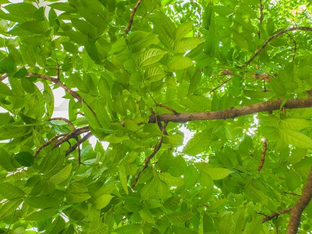 Sotto il grande fondo della luce della natura del modello della foglia di verde dell'albero