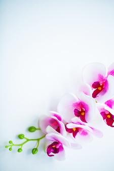 Spa e benessere scena. fiore dell'orchidea sui precedenti pastelli di legno