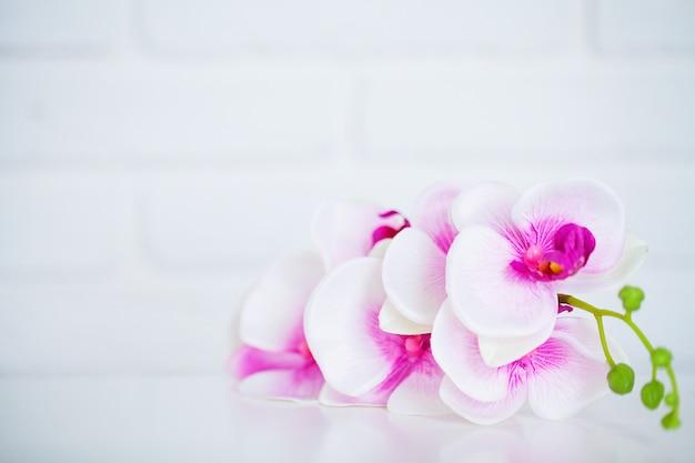 Spa e benessere scena. fiore dell'orchidea sul legno