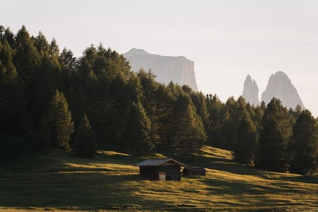 Sparato di piccola cabina di legno su un campo di erba circondato dagli alberi