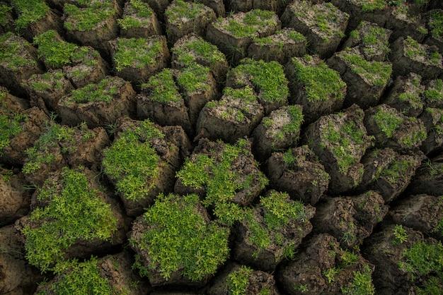 Spazio al suolo del suolo incrinato. un primo piano di crepe sul terreno dovute alla siccità del serbatoio.