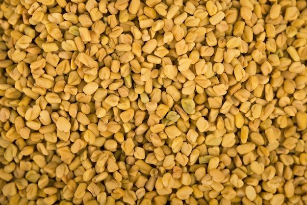 Spazio semi di fieno greco, spezie, ingrediente culinario. spezie indiane
