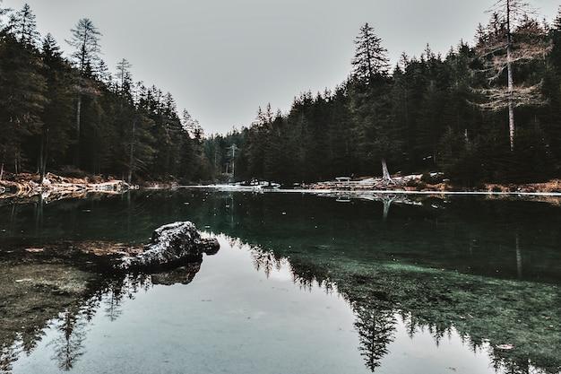 Specchio d'acqua attraverso alberi frondosi