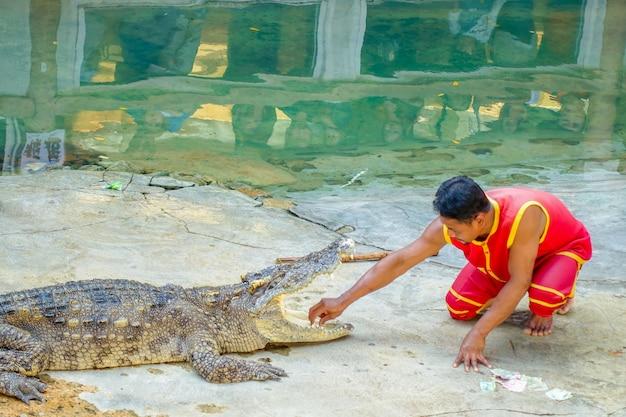 Spettacolo di coccodrilli a bangkok