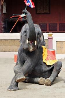 Spettacolo di elefanti