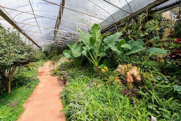 Spettacolo di piante e fiori in serra