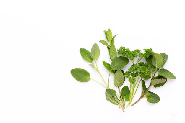 Spezie a base di erbe su uno sfondo bianco